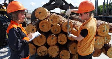 Українська деревообробка відроджується на Рівненщині Скандинавські інвестори розпочинають будувати у Сарненському районі на півночі Рівненщини новий лісопильний завод — другий за останні два роки. Обсяг залучених інвестицій — 20 млн. євро